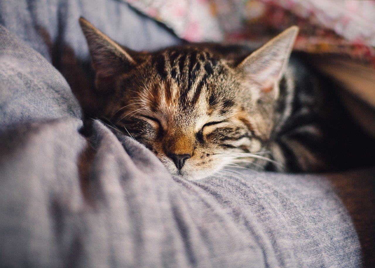 cat-4189697_1280のアイキャッチ画像