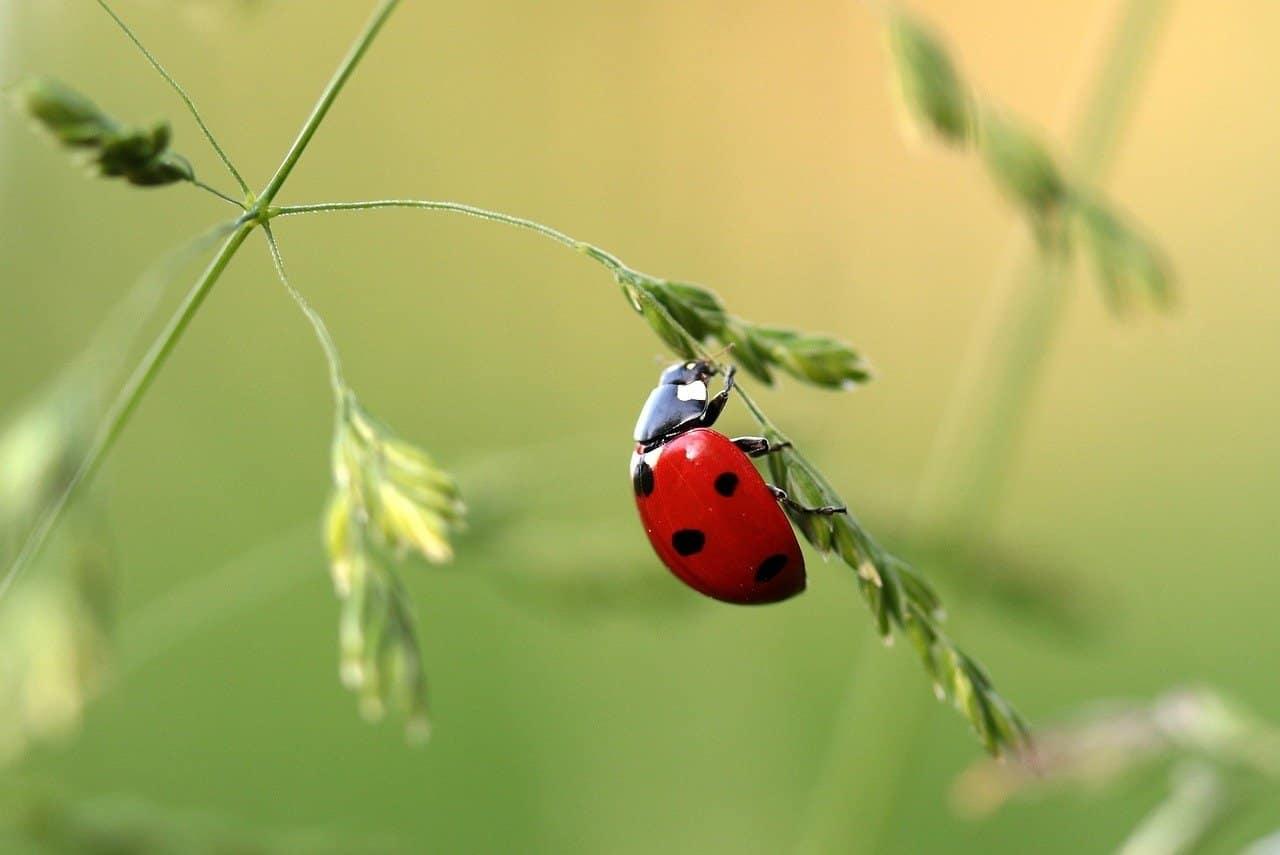 ladybug-1480102_1280-minのアイキャッチ画像